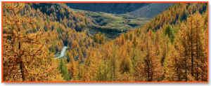 calendario2007: autunno.jpg(22868)