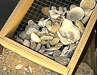 Fossili di Alba