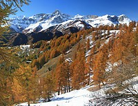 Foliage in Valle Maira