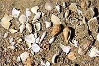 Fossili delle Langhe