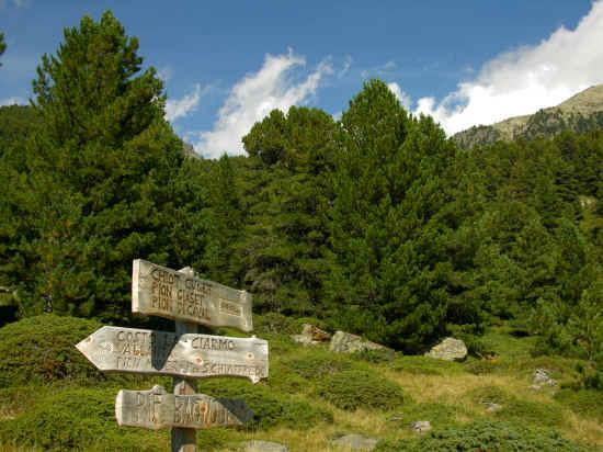 Bosco dell'Alevè